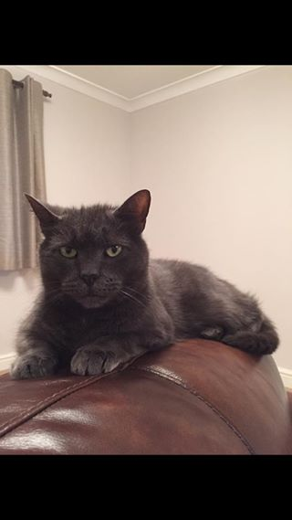 Picture of Archer the Cat
